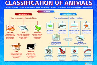 classification of animals diagram in Organ