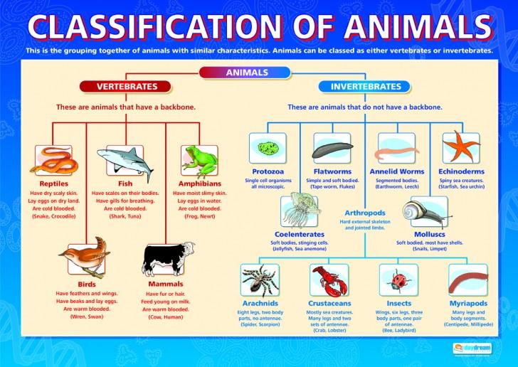 Invertebrates , 5 Types Of Invertebrates : Classification Of Animals Diagram