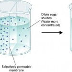 diffusion of water through a membrane , 6 Pictures Of Osmosis Of Water In Cell Category