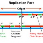 dna replication animation wiley , 5 Animation On Dna Replication In Cell Category