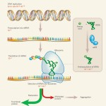 dna rna protein synthesis test , 7 Rna Quiz In Cell Category