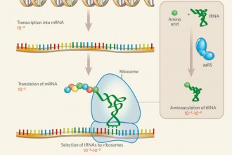 dna rna protein synthesis test in Plants