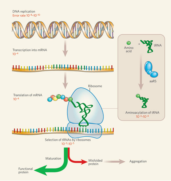Genetics , 5 Protein Synthesis Quiz : Dna Rna Protein Synthesis Test