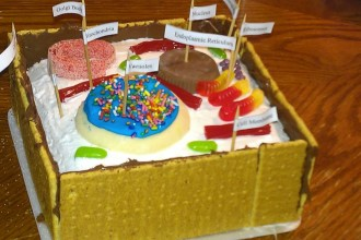 Edible Model Of A Plant Cell , 5 Edible Plant Cell Project Ideas In Cell Category