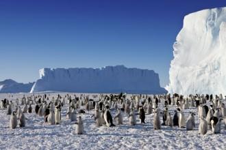 Emperor Penguins Population , 6 Emperor Penguins Facts In Birds Category