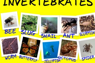 Examples Of Invertebrates , 5 Types Of Invertebrates In Invertebrates Category