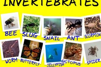 Examples Of Invertebrates , 5 Types Of Invertebrates In Invertebrates Category