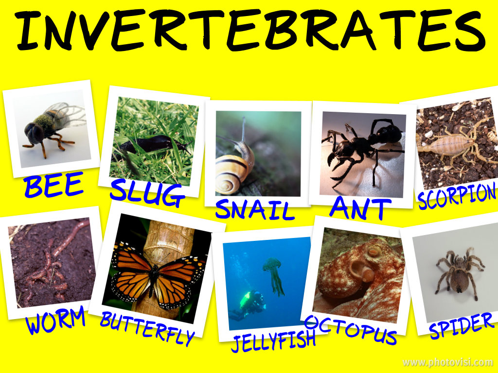 Examples Of Invertebrates : 5 Types Of Invertebrates ...  Examples Of Inv...