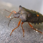 forest bug , 6 Bug Or Beetle In Bug Category