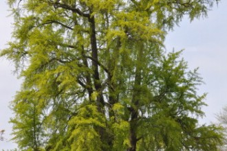 great british trees in Birds