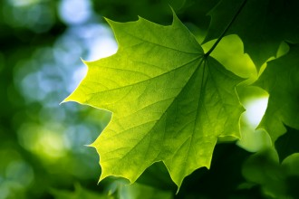 green leaf in Animal