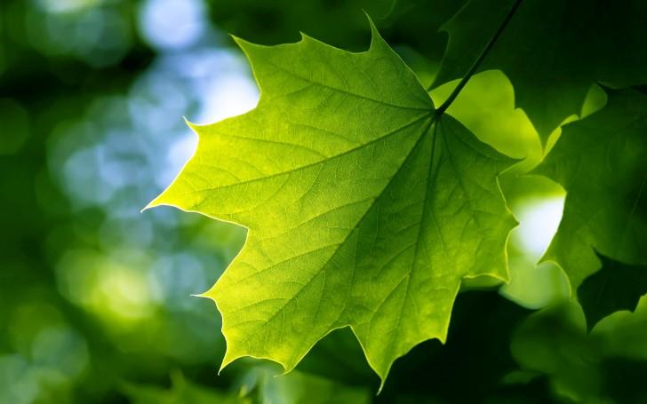 Plants , 7 Green Leaf Landscaping : Green Leaf
