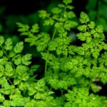 green leaf landscape photo , 7 Green Leaf Landscaping In Plants Category