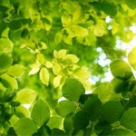 green leaf landscaping picture , 7 Green Leaf Landscaping In Plants Category