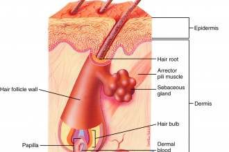 Hair Follicle Tubelike Structure , 8 Structure Hair Follicle Pictures In Organ Category