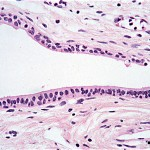 histology , 6 Photos Of Anatomy Histology In Cell Category