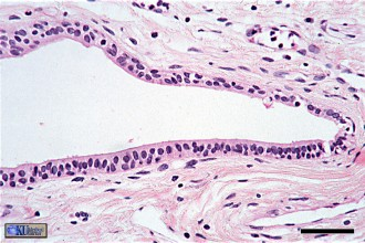 histology in pisces