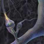 human neuron HD wallpaper , 5 Brains Synapse Neurons Wallpaper In Brain Category