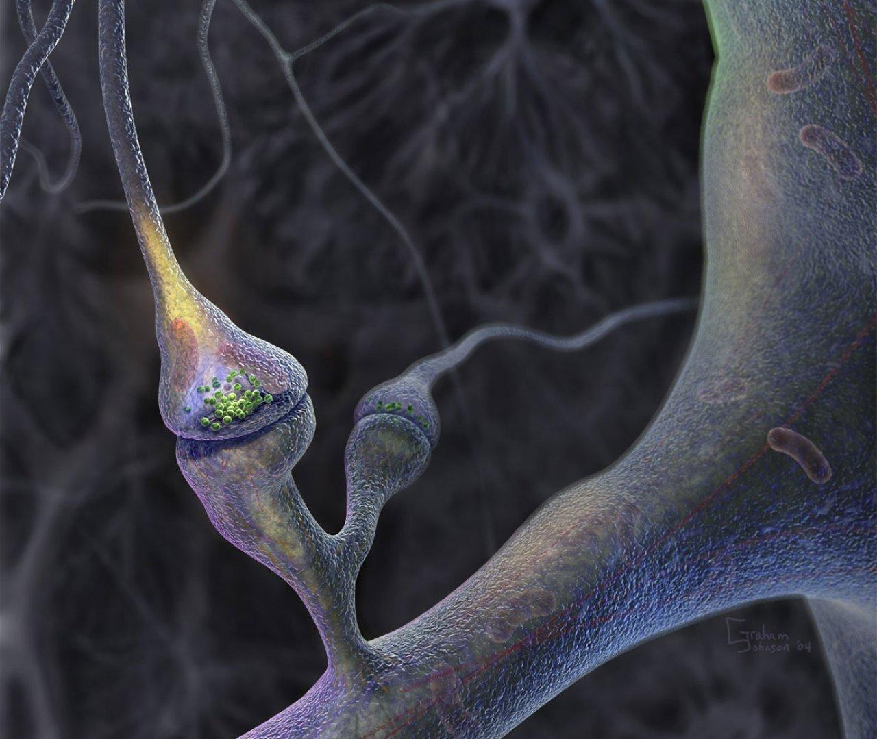 brain neuron wallpaper download - photo #2