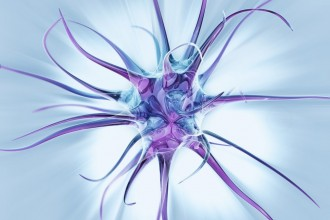 Human Neuron Synapse Wallpaper , 5 Brains Synapse Neurons Wallpaper In Brain Category