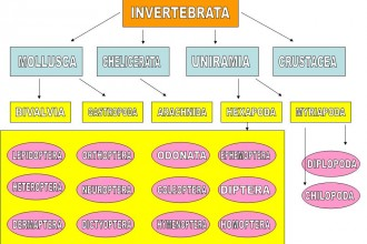 Invertebrates Hierarchical Taxonomy Diagram , 5 Types Of Invertebrates In Invertebrates Category
