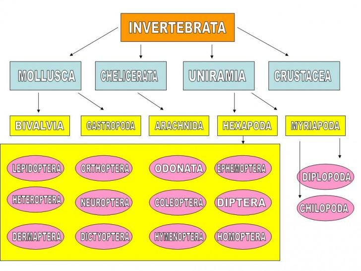 pulpbits net invertebrates 5 types of invertebrates invertebrates ...