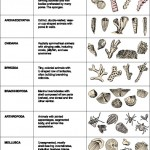 invertebrates list , 5 Types Of Invertebrates In Invertebrates Category