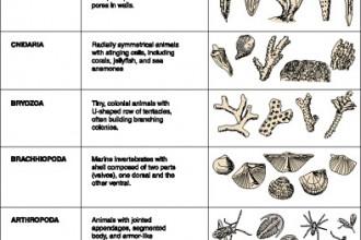 Invertebrates List , 5 Types Of Invertebrates In Invertebrates Category