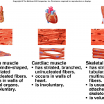 kinds of muscles functon , 5 Main Tissue Types Found In The Human Body In Cell Category