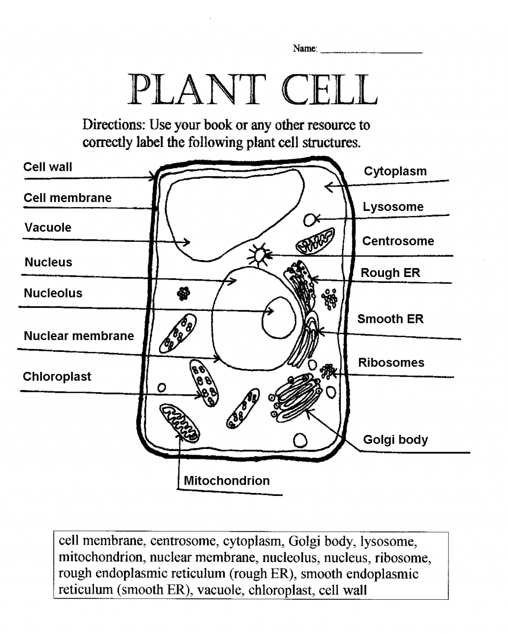 "Printable Animal Cell Diagram ??"" Labeled, Unlabeled, and Blank"