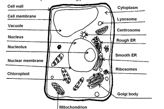 label plant cell worksheet 1 in Animal