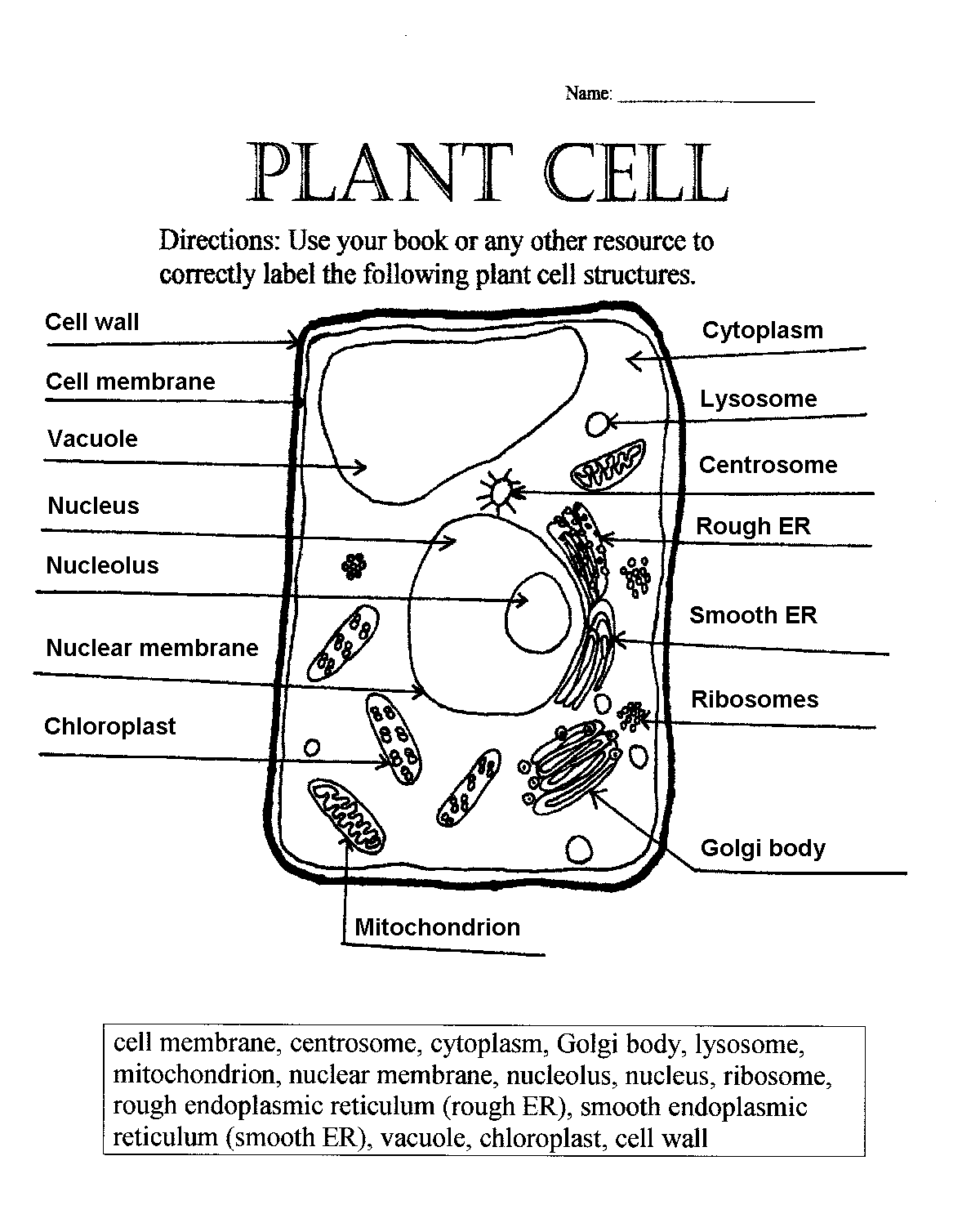 cell diagram worksheet – Plant Cell Diagram Worksheet