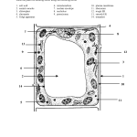 label plant cell worksheet 4 , 5 Label Plant Cell Worksheet In Cell Category