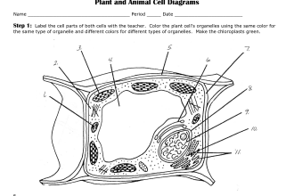 Animal and Plant Cells | The plant, Middle and School life