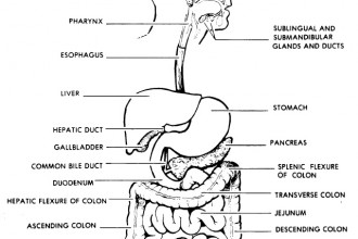 Label The Parts Of The Digestive System Worksheet , 7 Label The Parts Of The Digestive System In Organ Category