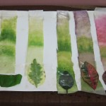 leaf chromatography experiments , 6 Leaf Chromatography Pictures In Laboratory Category