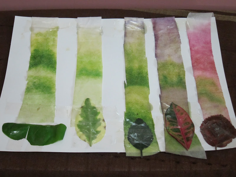 Leaf Chromatography Experiments : 6 Leaf Chromatography Pictures ...
