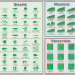 leaf identification key , 7 Leaf Tree Id Key Review In Plants Category