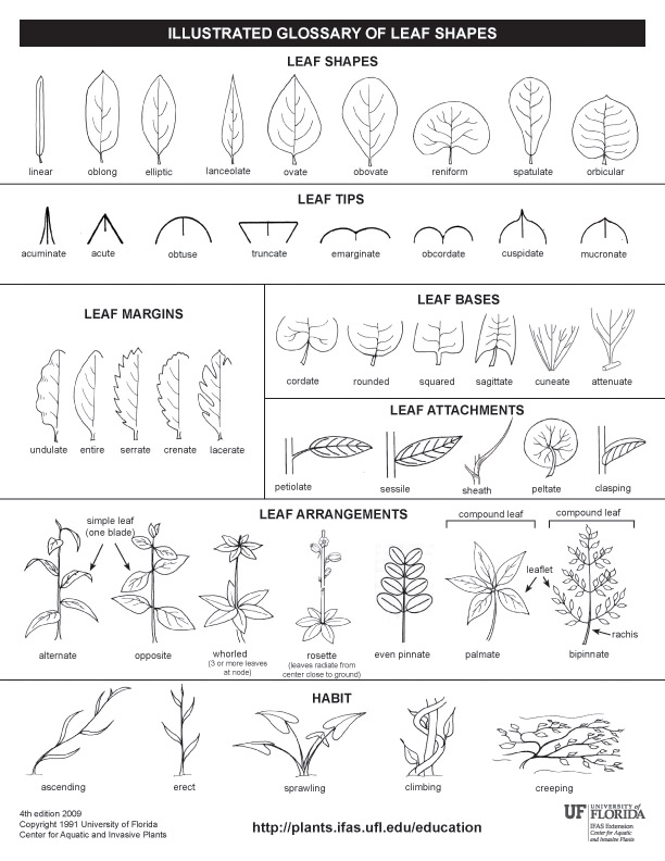 Plants , 7 Leaf Tree Id Key Review : Leaf Tree Id Key