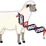 learn genetics cloning , 7 Learn Genetics Cloning In Genetics Category