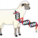 learn genetics cloning , 7 Learn Genetics Cloning In Genetics Category