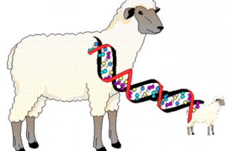 learn genetics cloning in Mammalia