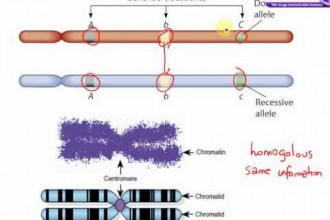 learn genetics transcription in Genetics