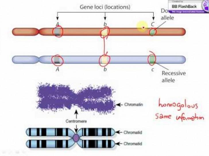 Genetics , 6 Learn Genetics Transcription : Learn Genetics Transcription
