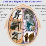 left and right brain functions , 8 Left Right Brain Characteristics In Brain Category
