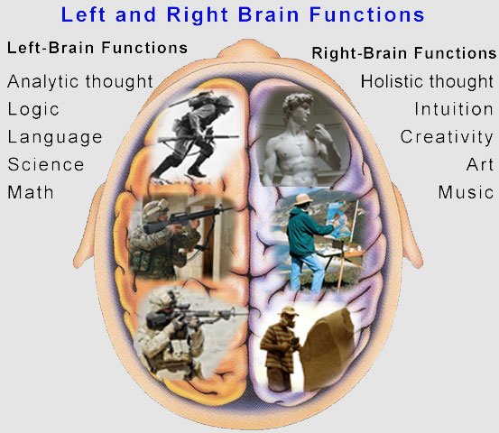 left and right brain functions : Biological Science ...