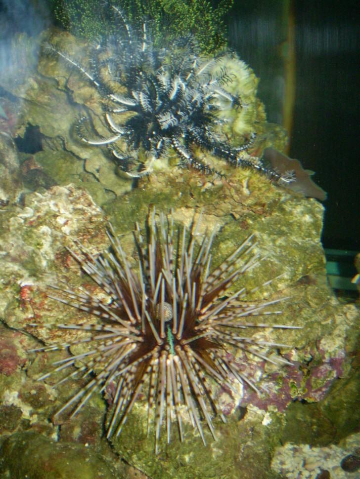 Invertebrates , 9 Marine Invertebrates : Marine Invertebrates Animals
