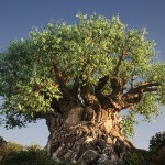 meaning of tree , 5 Tree Of Life In Plants Category