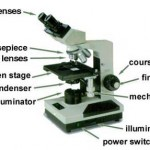 microscope labeled , 5 Labeled Parts Of A Microscope In Cell Category