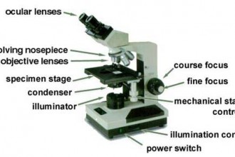 microscope labeled in Dog